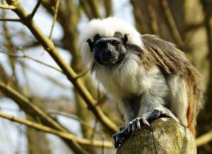 Affen gehören in die Natur, nicht ins Versuchslabor; Foto: Reinhard Grieger_pixelio.de