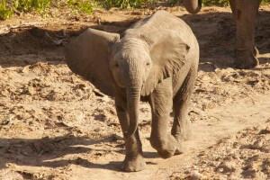 """Gesa: """"Wer einmal einem wilden Elefanten in die Augen geschaut hat..."""""""
